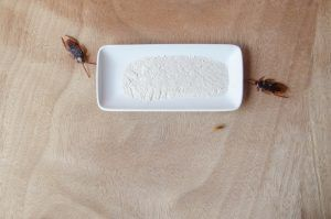 Roach bait lure trap get rid ofroaches on wooden background.
