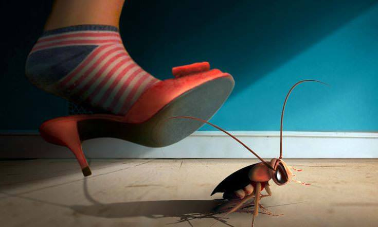 Step on roach at home