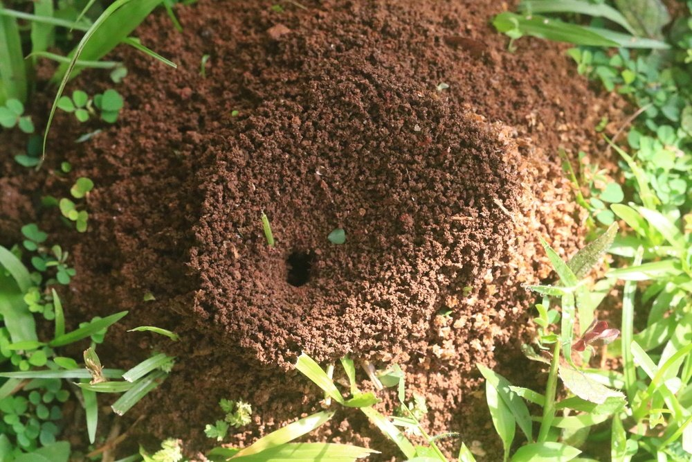 How to Get Rid of Ants (11 Best Natural Home Remedies)