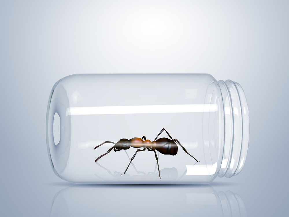 Brown ant trapped inside a glass jar on white background.
