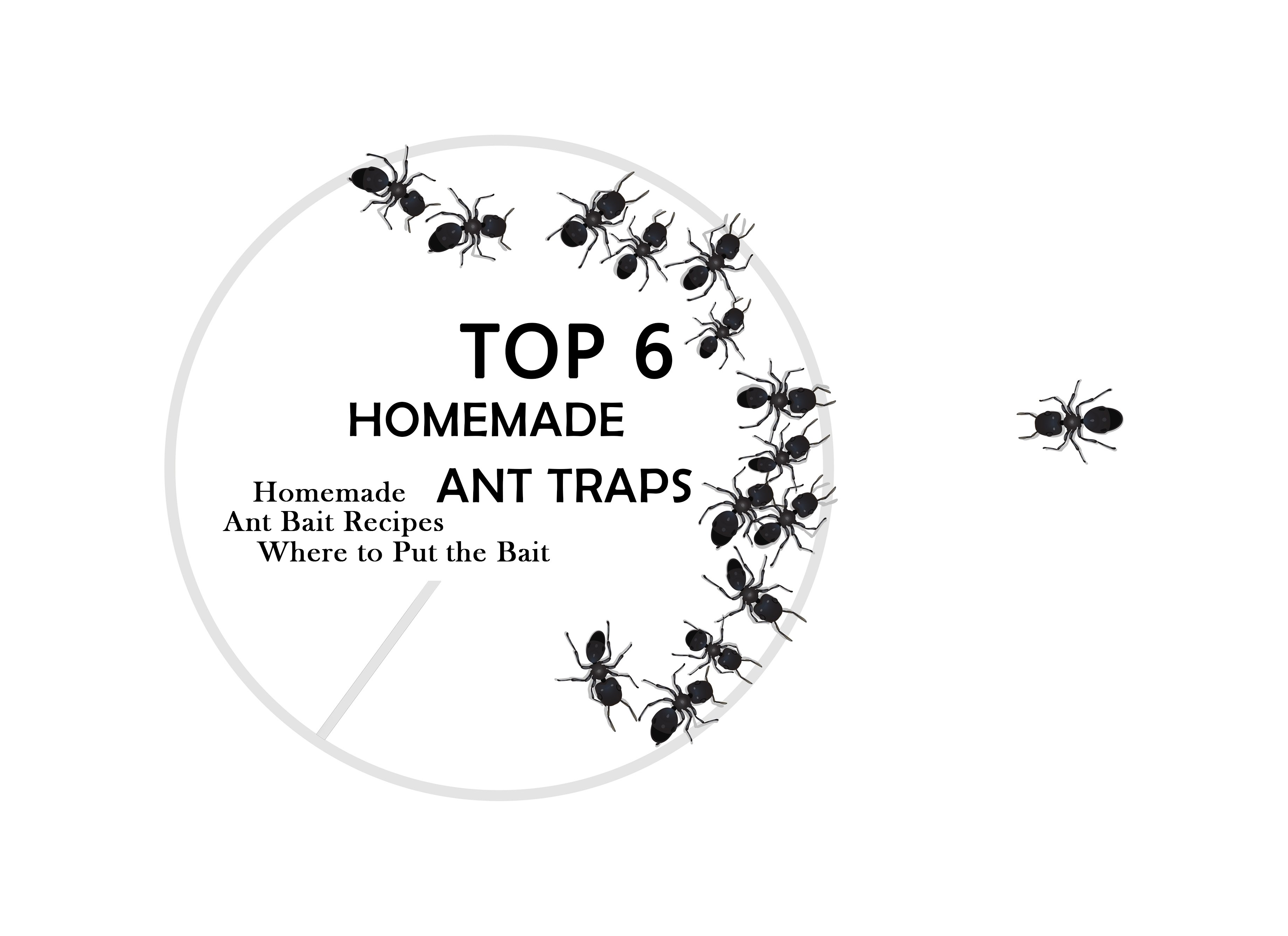 How to Make a DIY Ant Trap