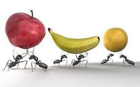 Ants stealing fruits