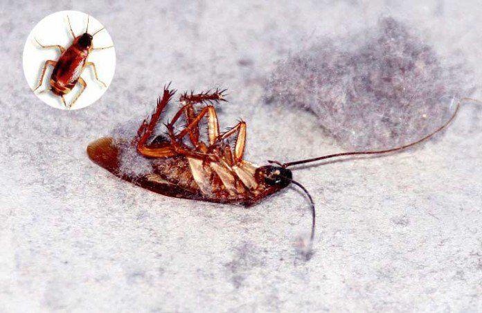 Dead cockroach on the ground
