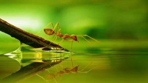 Ant near water