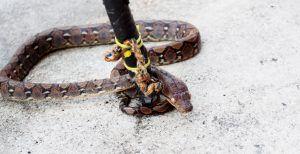 Catching snake on floor