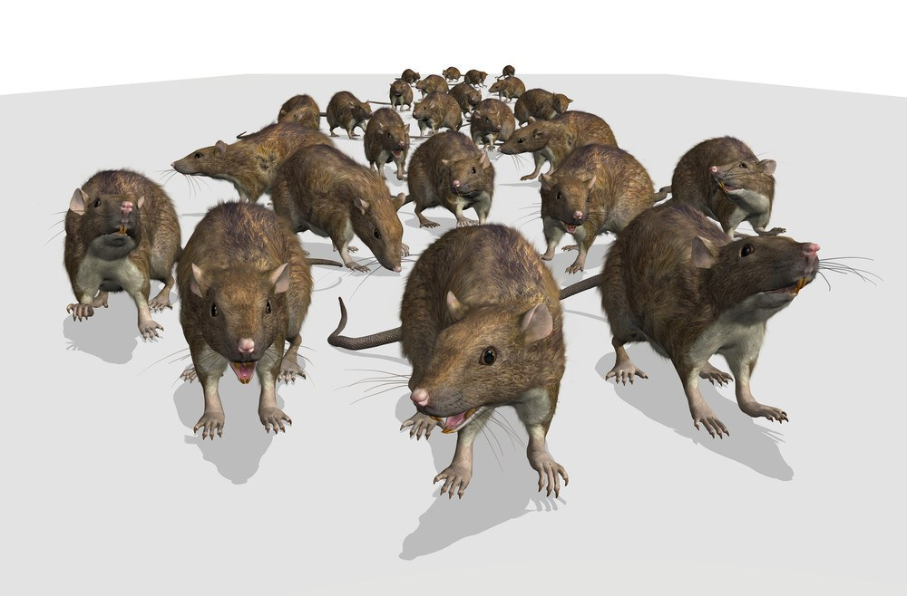 An army of mice is approaching.