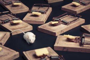 Mouse in danger surrounded by mouse traps.