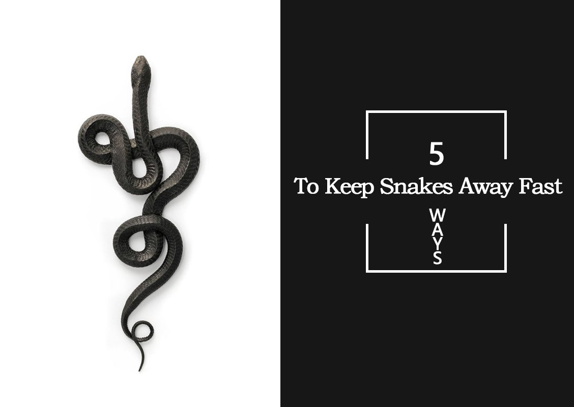 How to Keep Snakes Away Fast: 5 Methods You're Overlooking