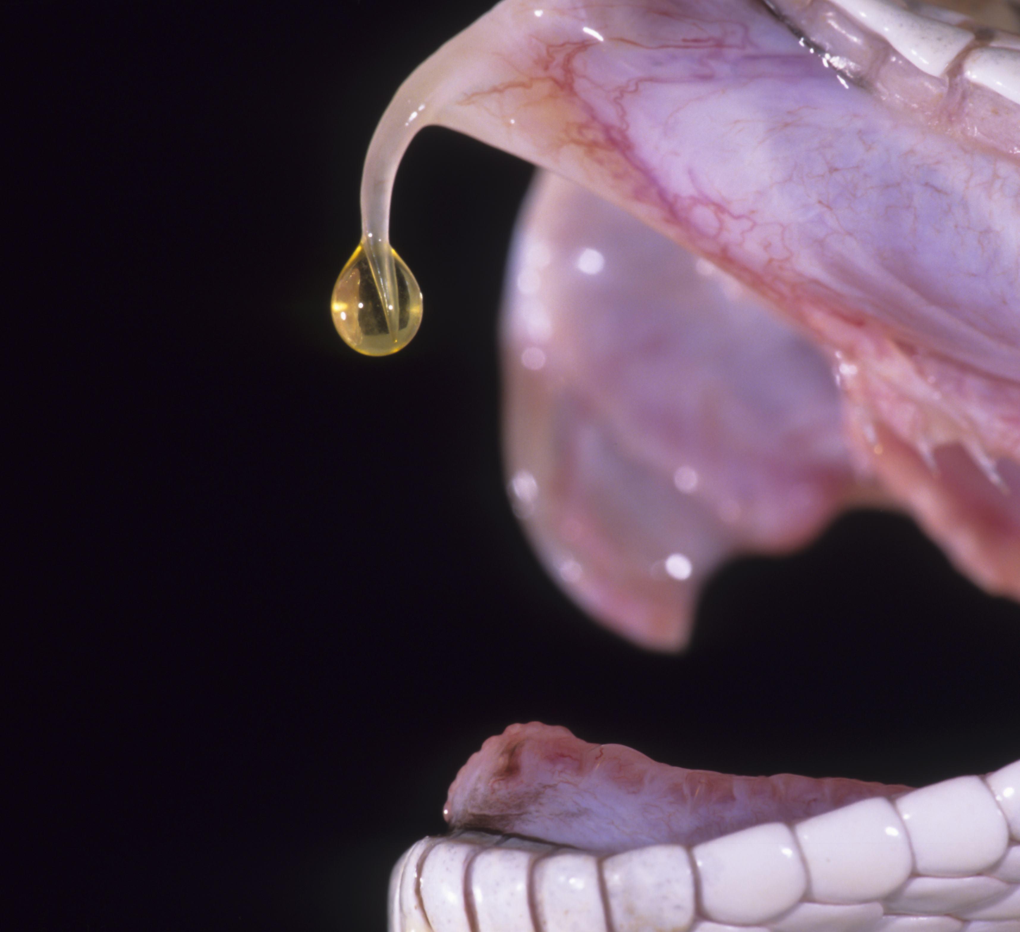Snake venom droping