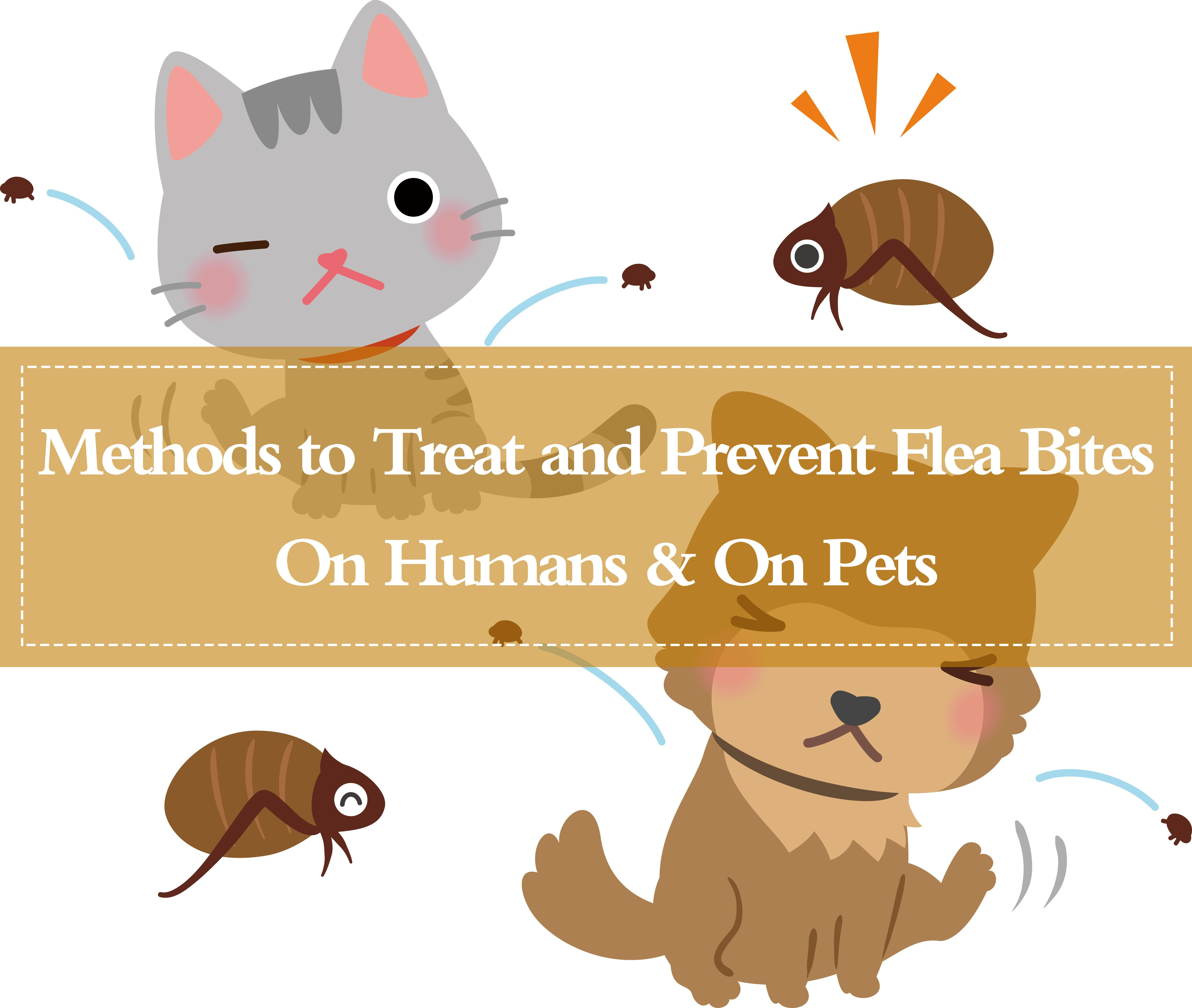 Get Rid of Flea Bites on Pets
