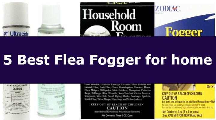 S To Remove Fleas From Carpets Carpet Vidalondon