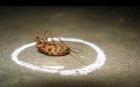Borax around a dead cockroach.