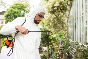 Male scientist in clean suit spraying pesticides on plants at greenhouse.