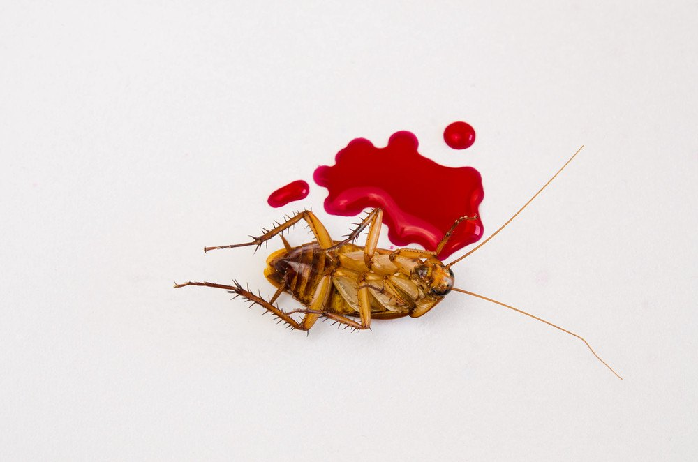Dead cockroaches has Blood on the floor.