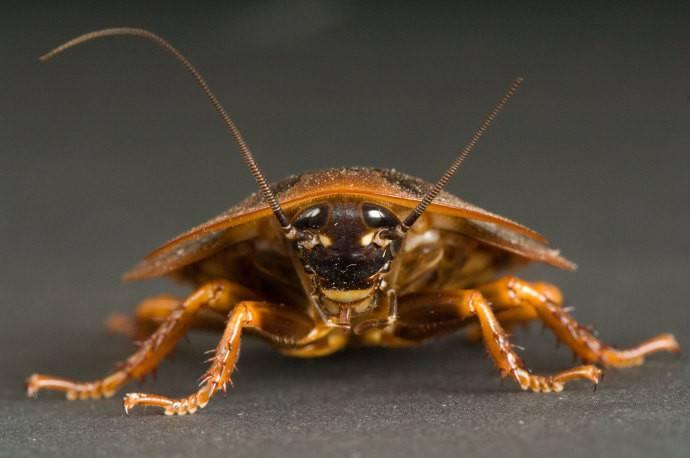Close up cockroach's head