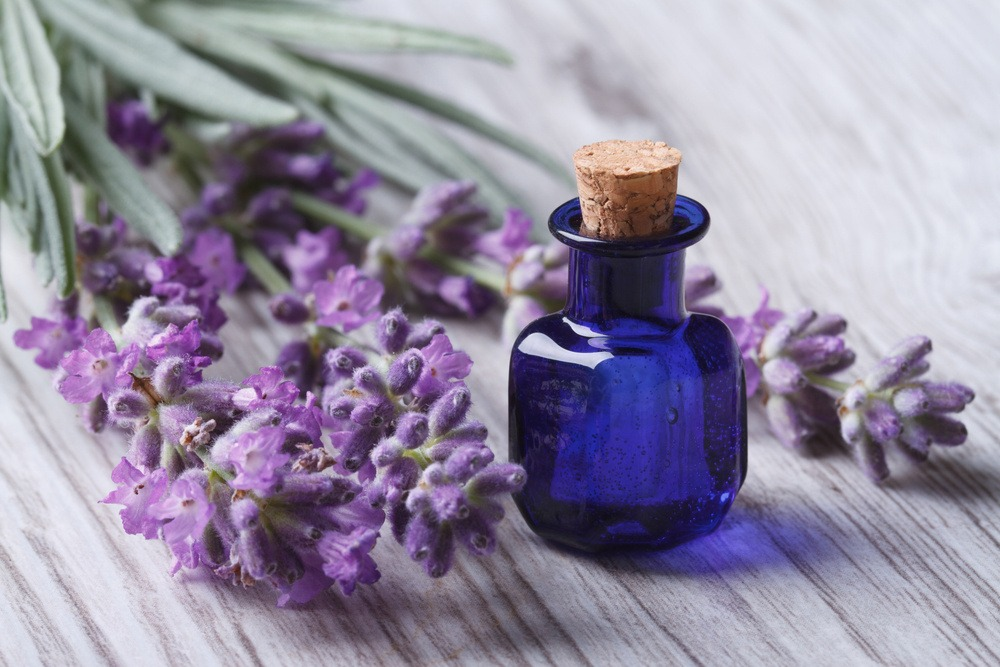 Close up of lavender oil in a glass bottle on a background of fresh flowers.