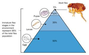The percentage of flea stages in the environment, from egg to adult flea