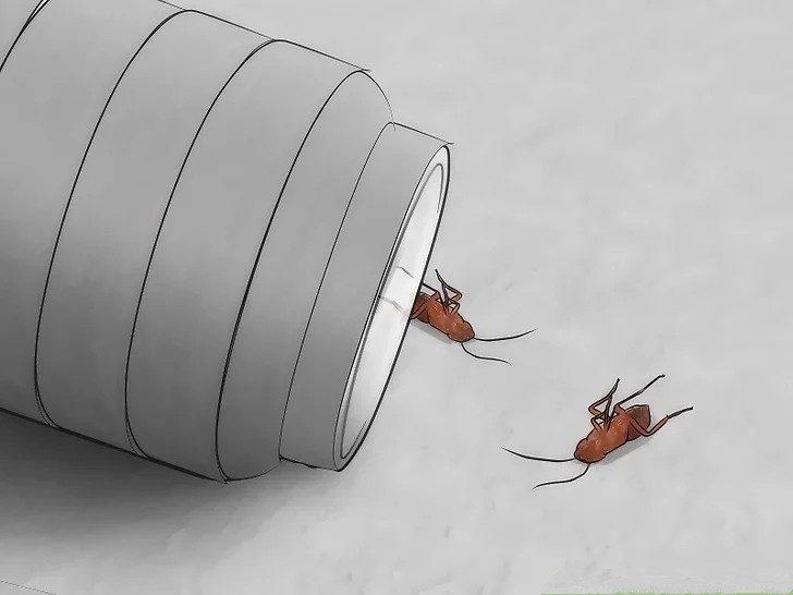 Dead roaches on floor