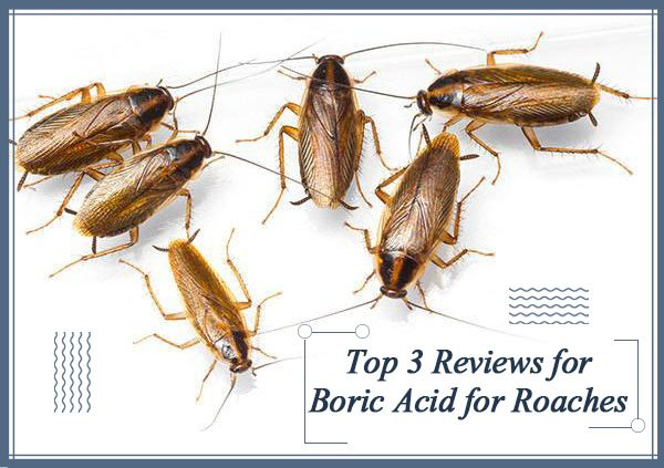 Top 3 Reviews for Boric Acid for Roaches & 16 Beginner Questions ...