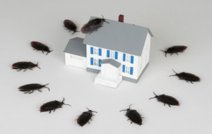 Cartoon picture of roaches around the home on white background.