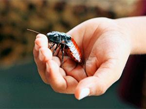 Roach bites on hand.