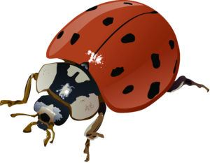 A 3D picture of Asian lady bug.