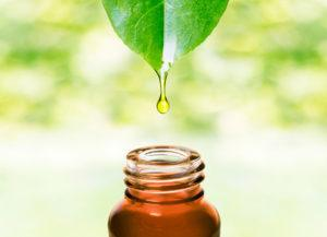Essential oil dropping from fresh leaf to the brown bottle.
