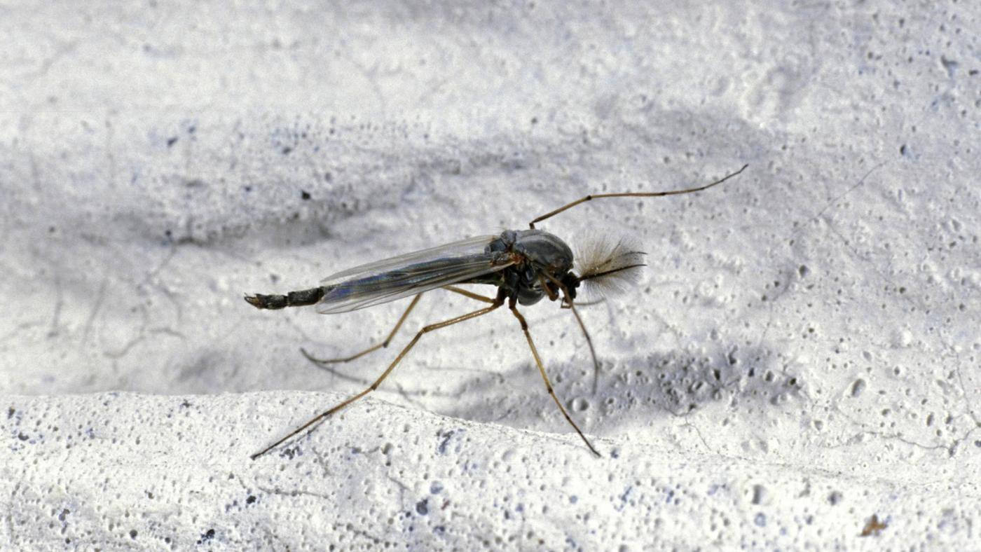 How to Get Rid of Gnats (in Your House) - The Definite Guide