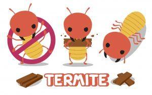 Cartoon termite set on white background.