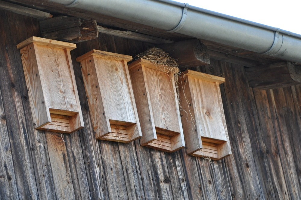 Bat boxes on the house.