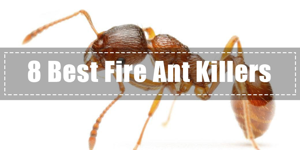 Top 10 Best Fire Ant Killers (2019 Review) - Pest Wiki