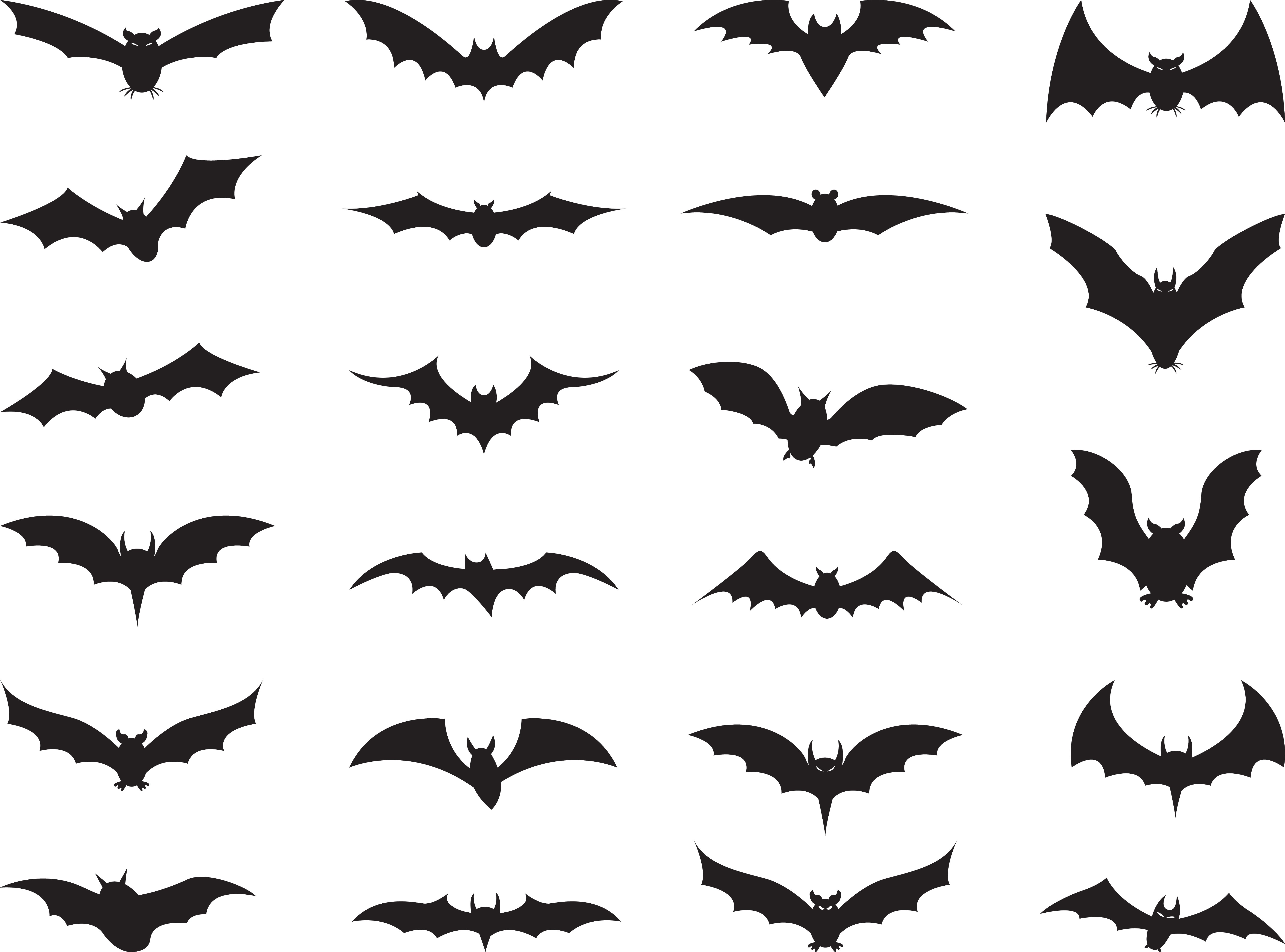 Different types of bats on the white.