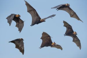 Several bats flying in air.