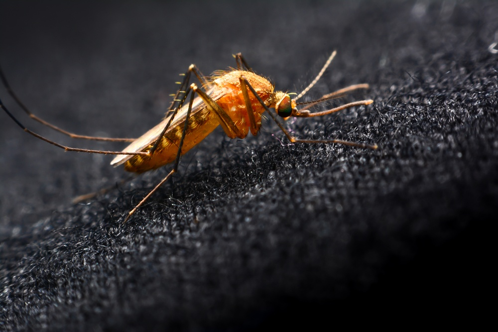Golden mosquito stands on black cloth.