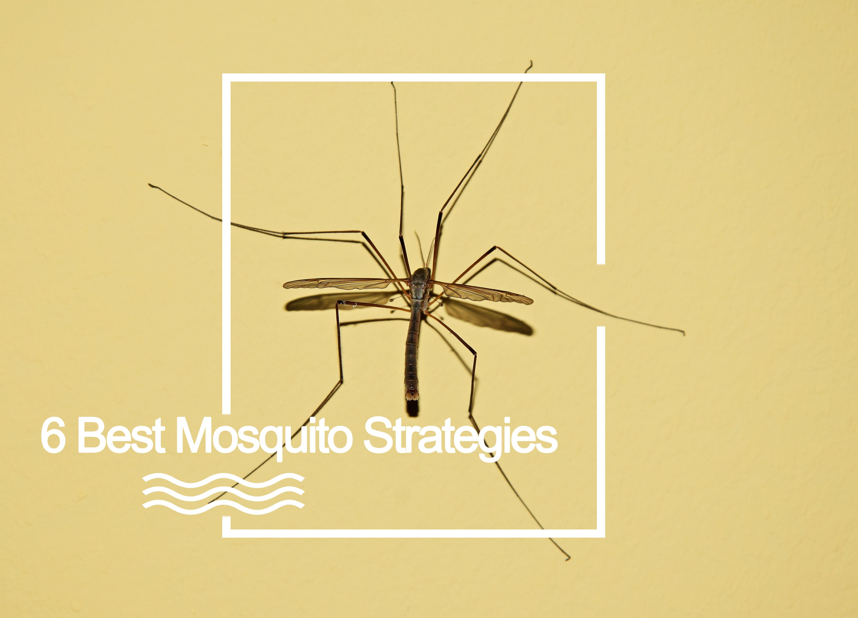 best mosquito strategie