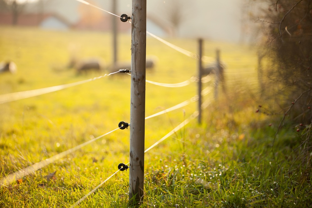 Electric fencing around lovely pasture.