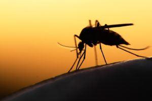 Best 12 Mosquito Repellent Plants (2017 Version) - PestWiki