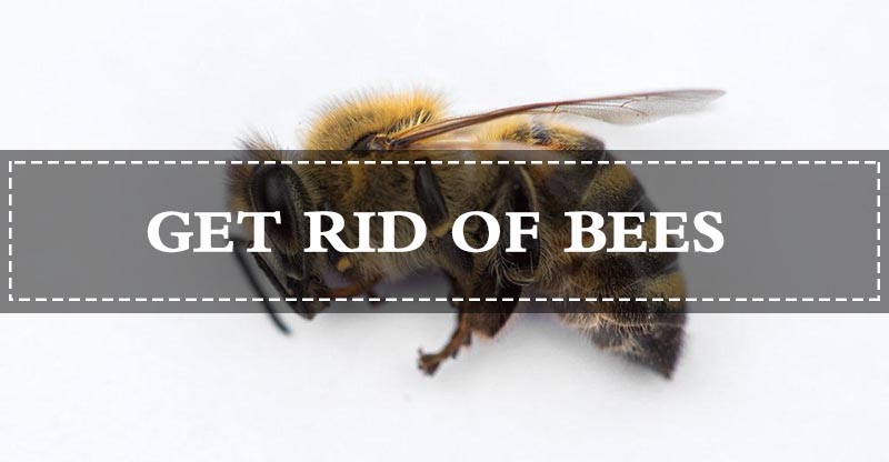 15 Safe Ways To Get Rid Of Bees Naturally Fast Pest Wiki