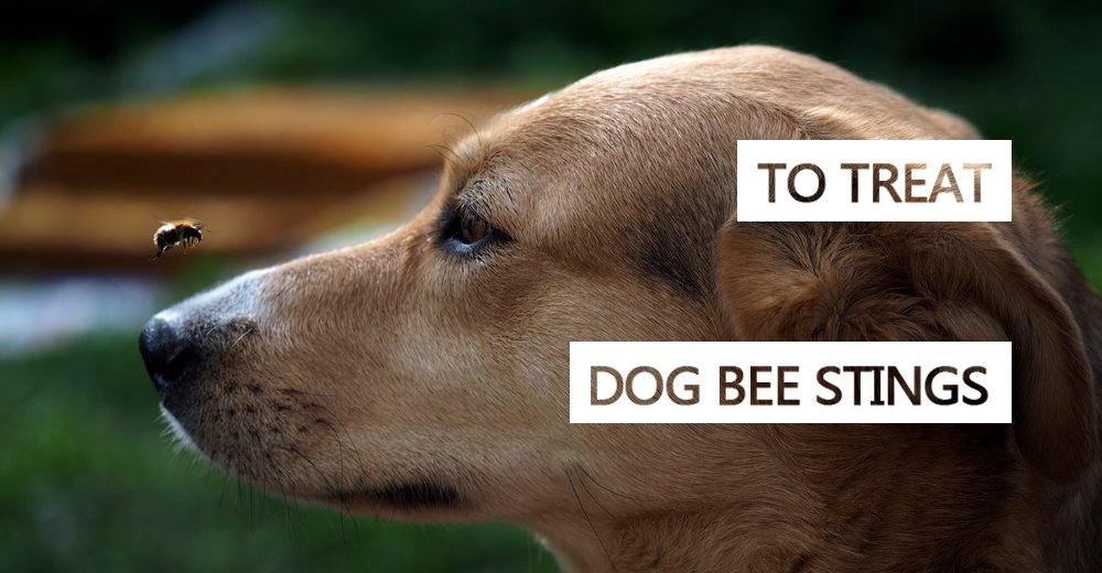 Dog Stung by Bee? 8 Home Remedies to Treat Dog Bee Stings