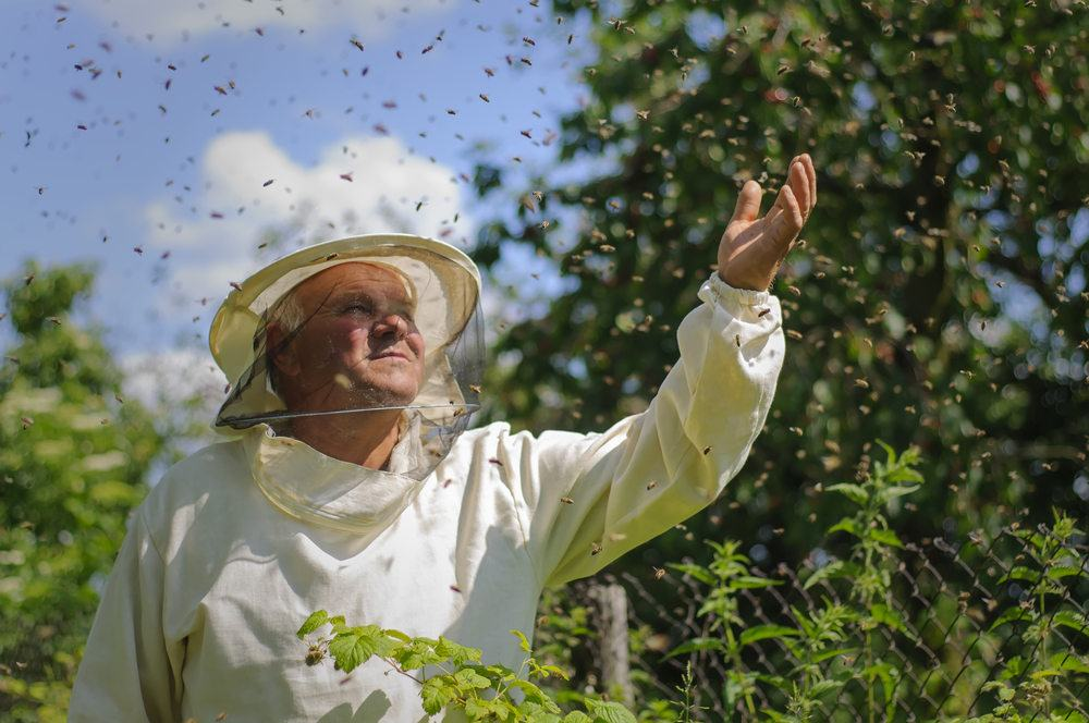 A beekeeper stands in a natural place, and bee swarm around him.