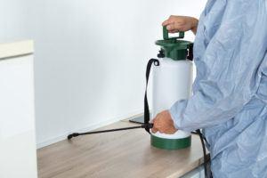 An exterminator spraying pesticide on kitchen counter.