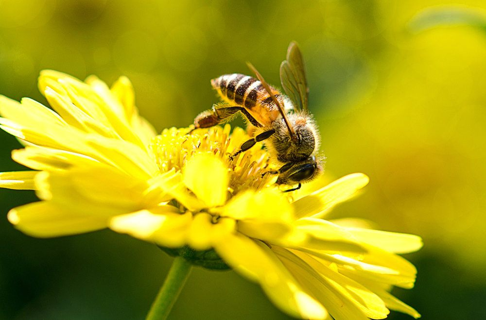 A photo of a beautiful bee and flowers on a sunny day.