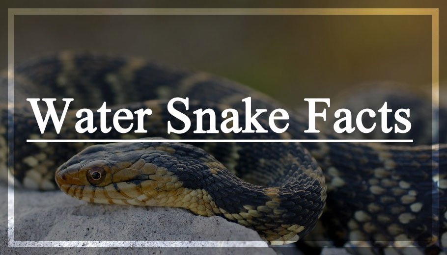 Water Snake Facts You Were Never Taught In School
