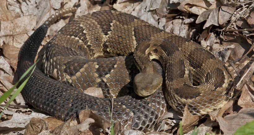 Snake in hibernation