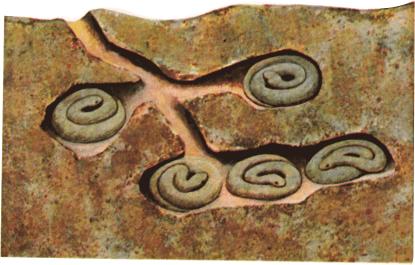 Snakes in hibernation hole