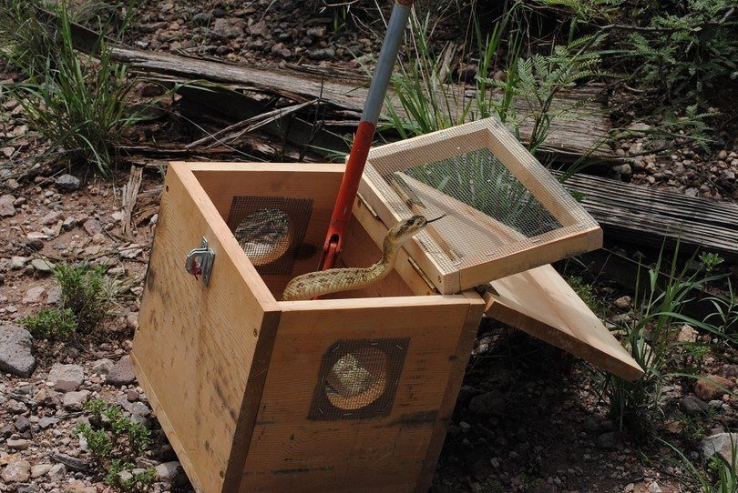 7 Best Affordable And Simple Snake Traps Of 2019 Pest Wiki