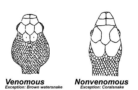 How to identify a poisonous snake