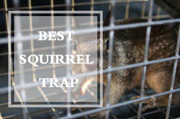 Best Squirrel Trap