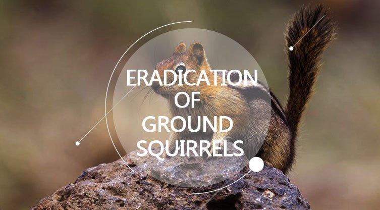 Eradication of Ground Squirrels