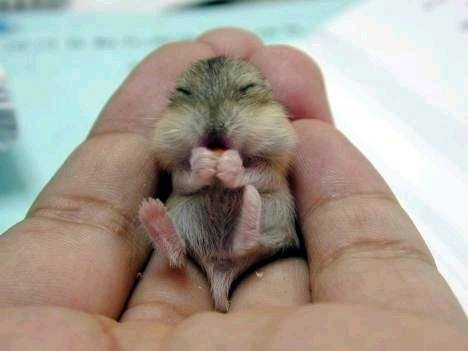 Baby chipmunk in human's hand.